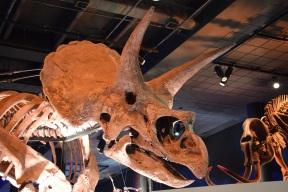 Dinosaurs s (4)
