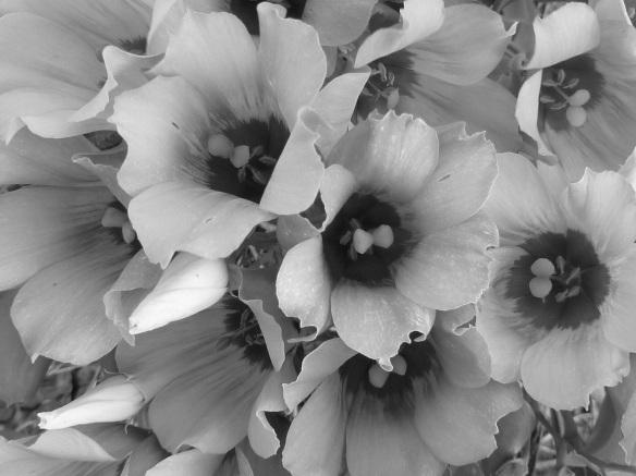 Flowers B&W s