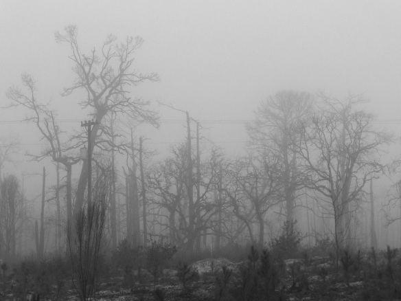 On a foggy morning in Bastrop, after the fire devastated the Lost Pines forest. You can see young trees growing in the foreground.