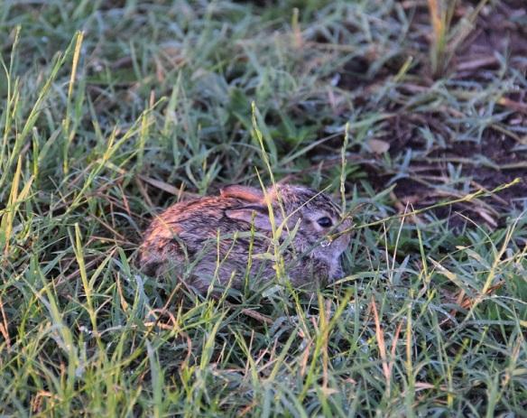 Baby rabbit being very still
