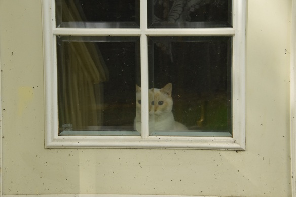 Cat looking through a beveled window