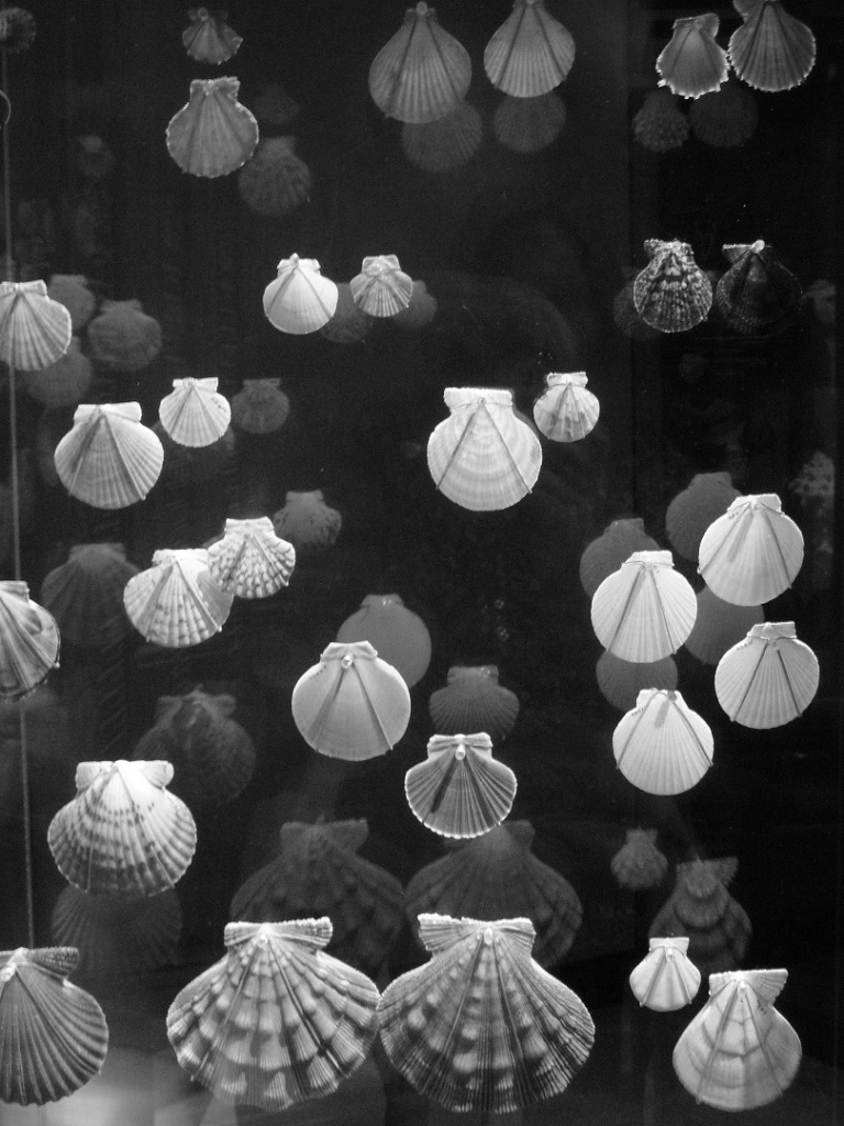 Shells reflected in their case