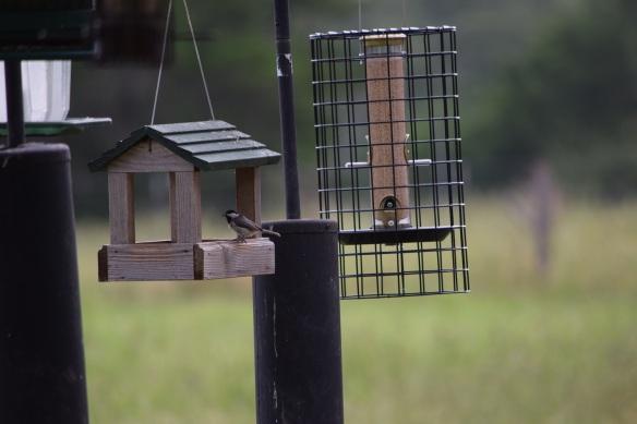 Birdfeeders (1)s