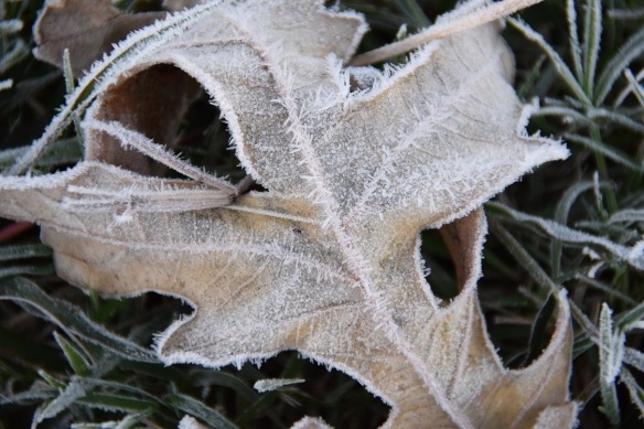 First frost 23 Nov 2015