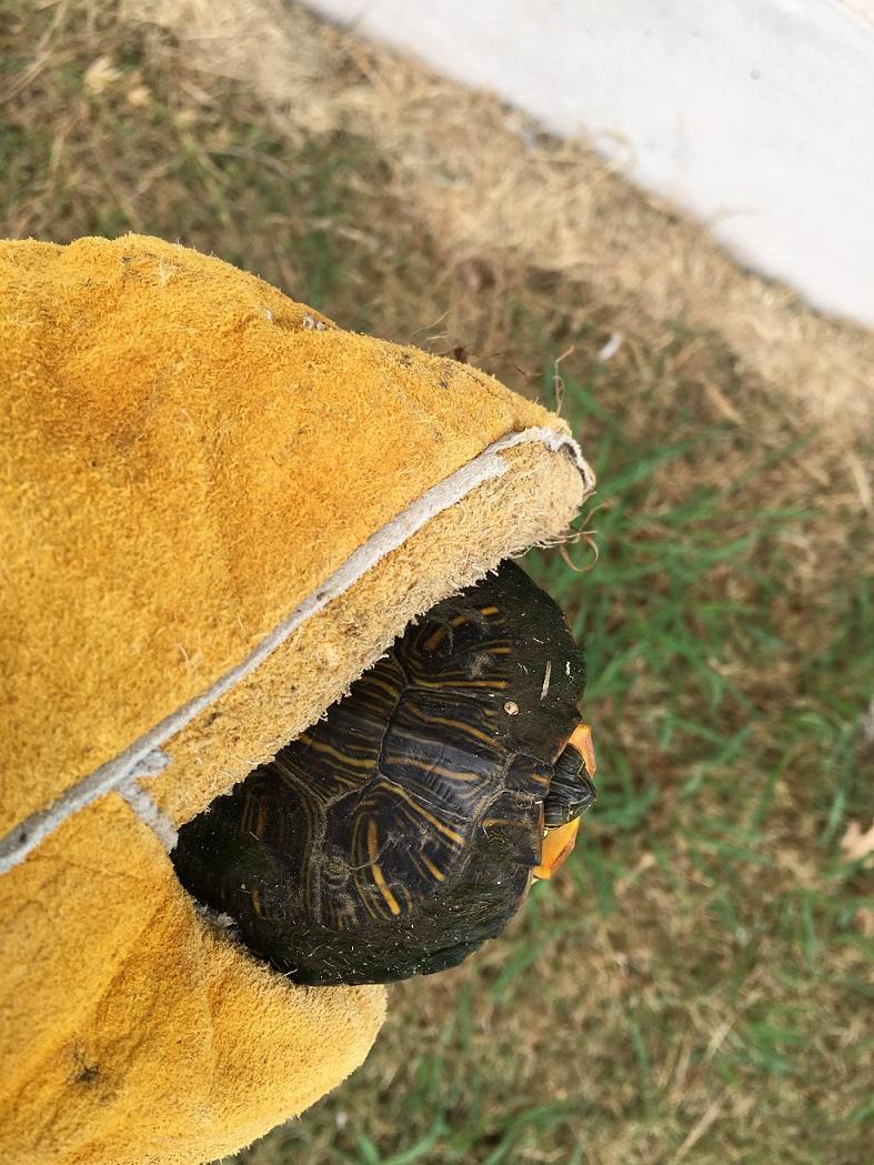 Turtle (1) s