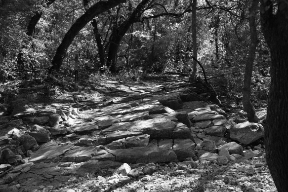 Trail on the Barton Creek Greenbelt