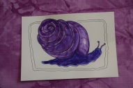 Snail 4s