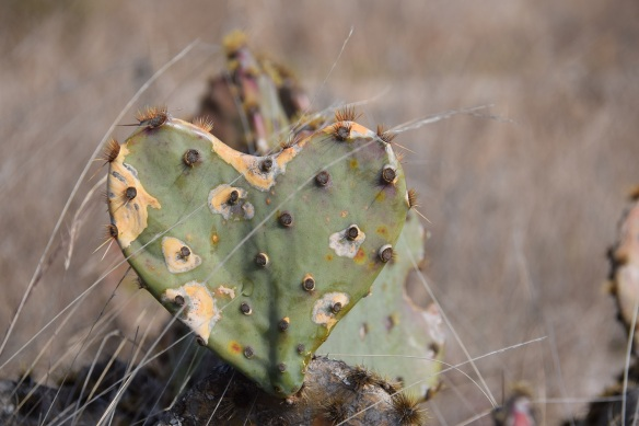 A heart-shaped cactus.
