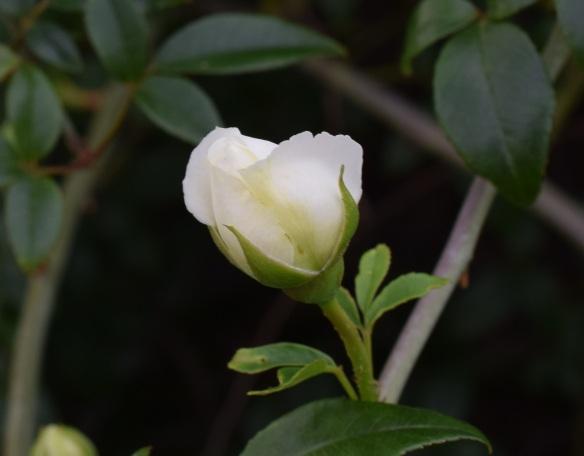 aa Flowers 3 (7)s