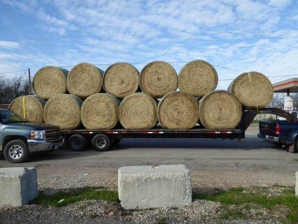 aa Hay Transport (3)s