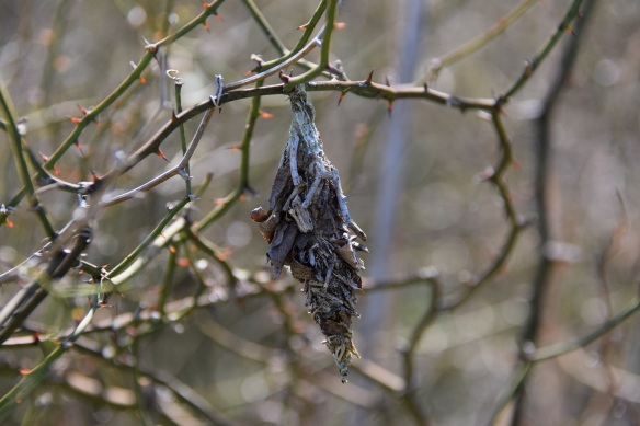 A cocoon. I don't know what kind.