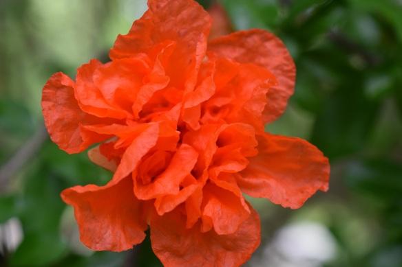 aa Zilker Botanical Garden 177 s