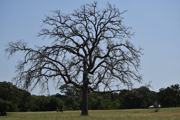 a Dead tree (10)s