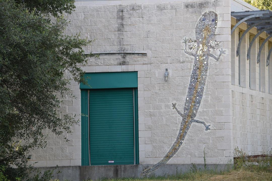 Lizard next to the door