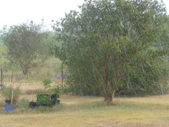 a Tree in Rain s