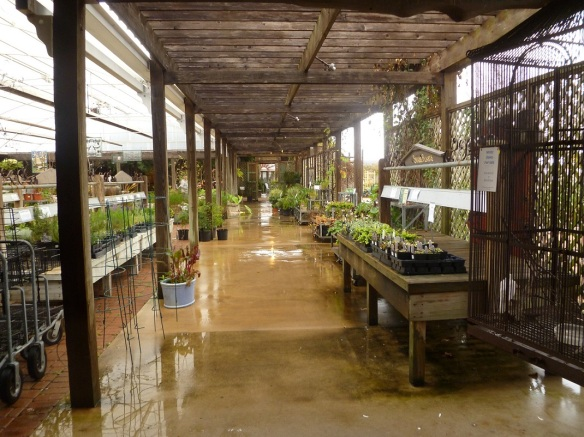 a Watering at the nursery s