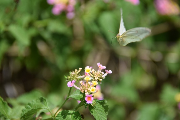 a-butterfly-landing-s