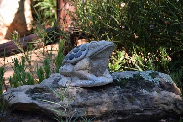 aa-rock-frog-s