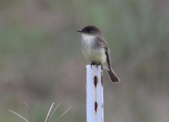 a-little-bird-2s
