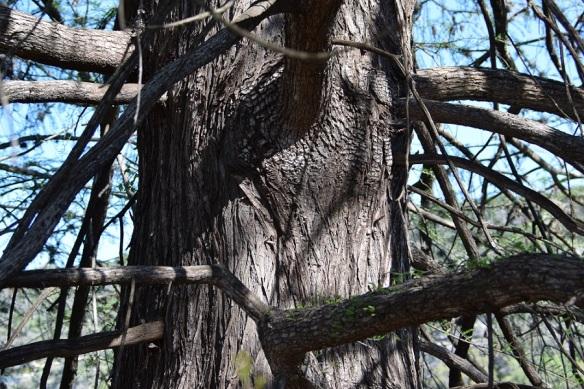 At the Nalle Bunny Run Wildlife Preserve along the Colorado River