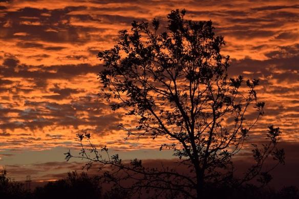 a-sunrise-2016-11-22-4s