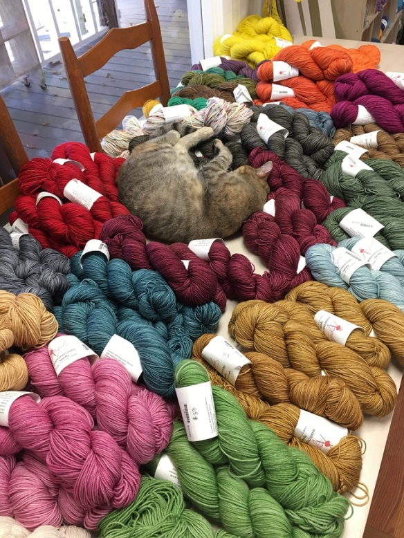 a-cat-and-yarn-1s