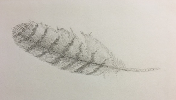 a-feather-sketch-4s