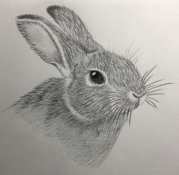 My rabbit drawing (graphite pencil)
