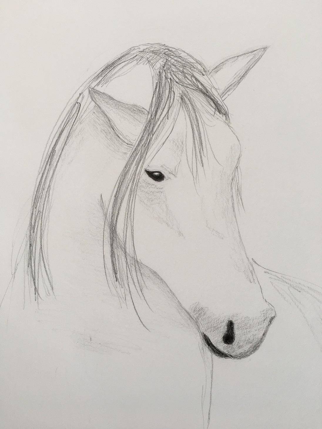 a-white-horse-s