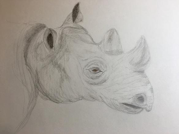 a-rhinoceros-3-s