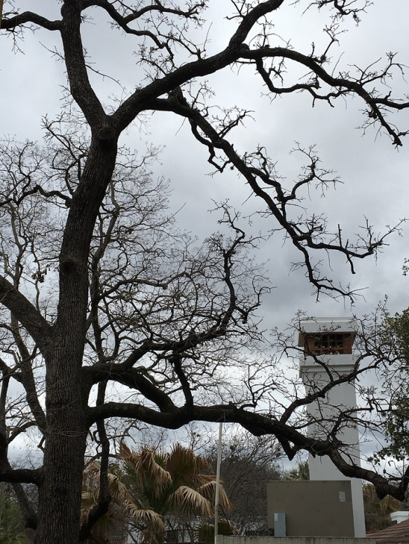 a-winters-tree-s