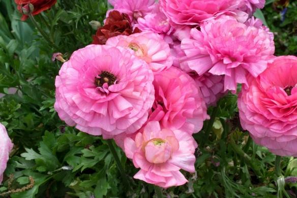 Pink Petals more2