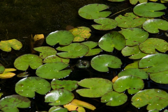 Frog Pond (2a)