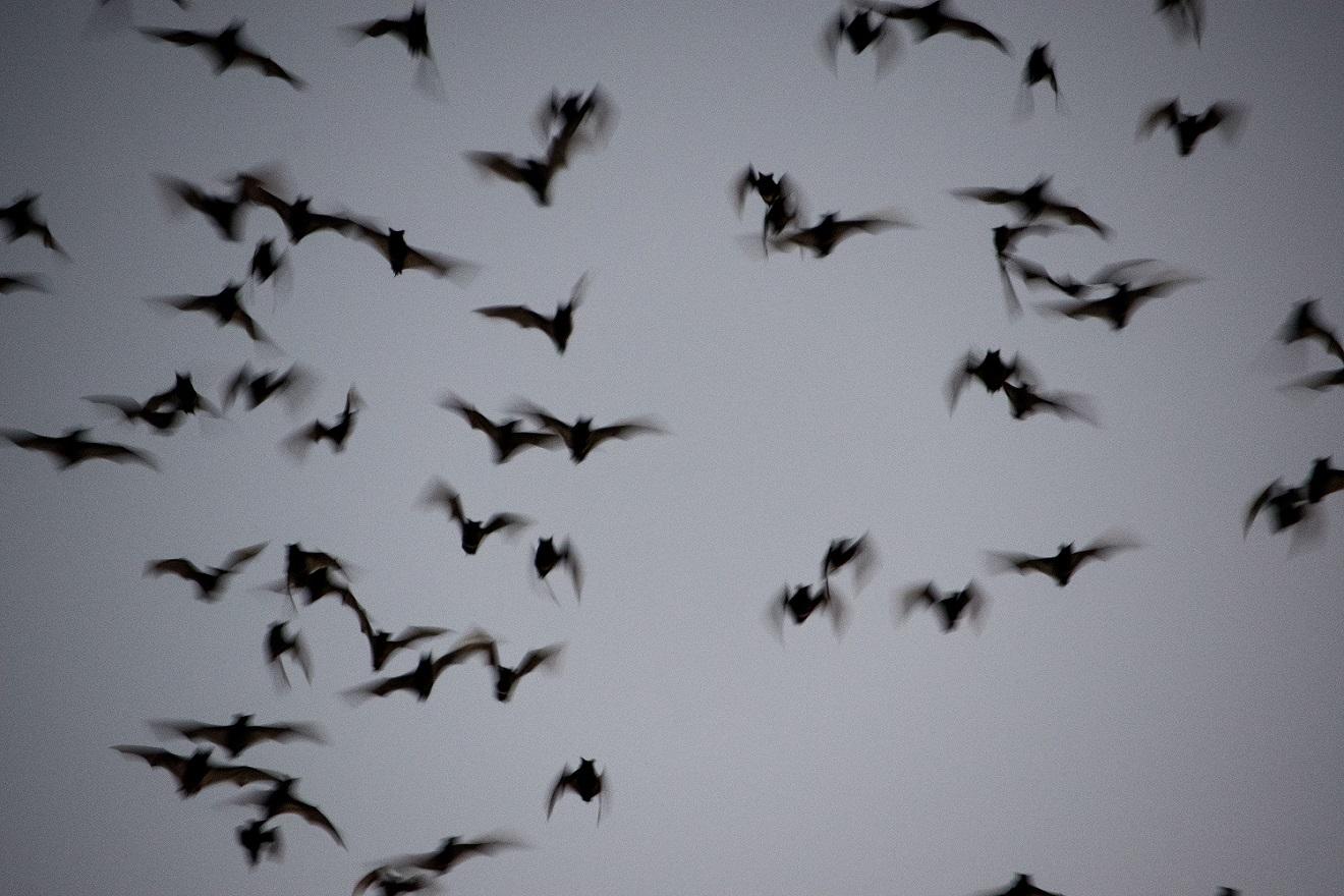 Bats (14)