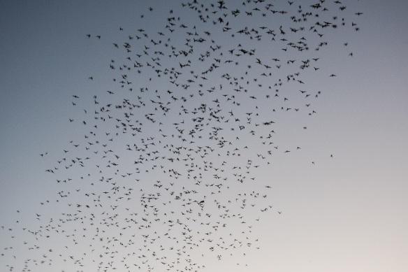 Bats (16)
