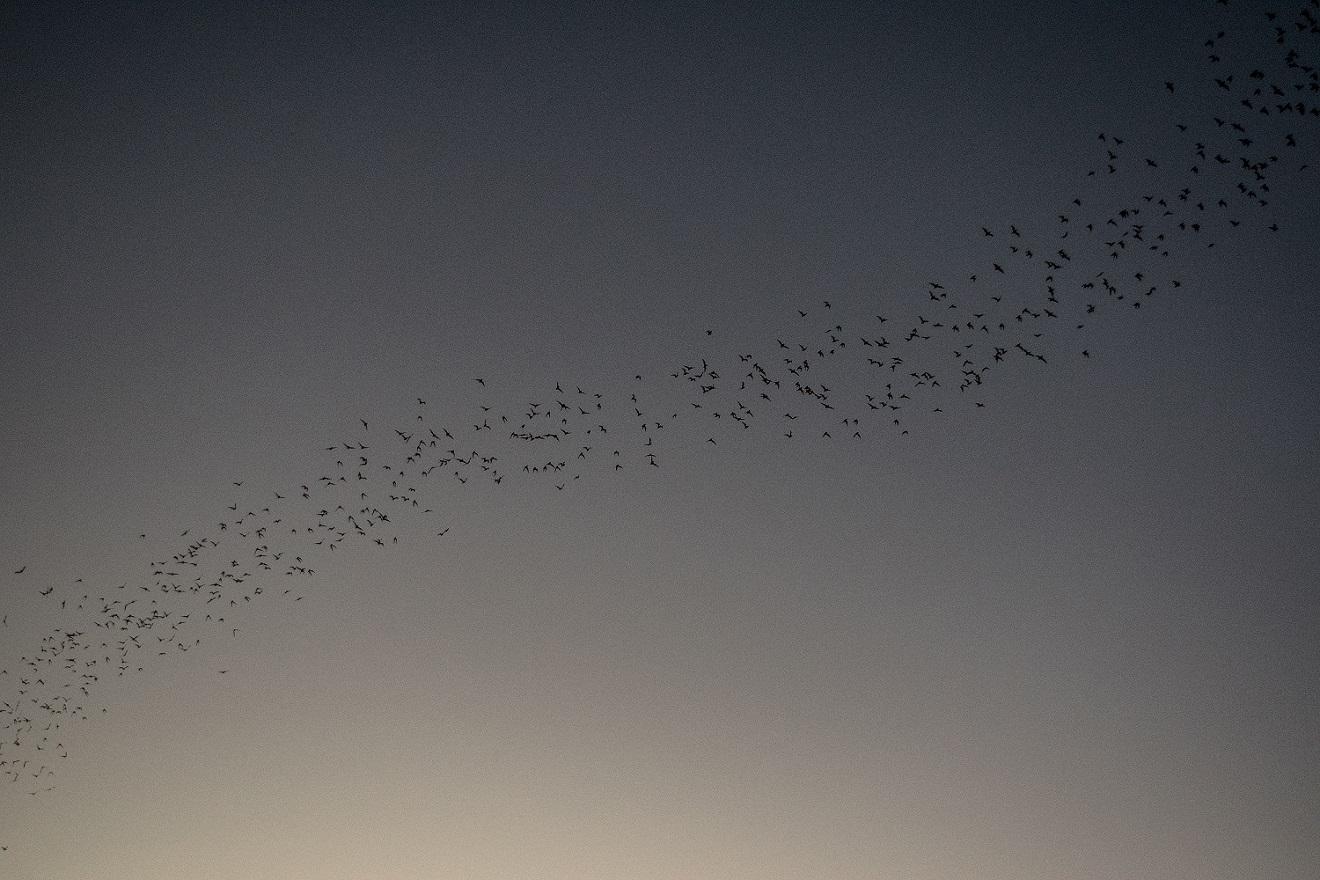 Bats (4)