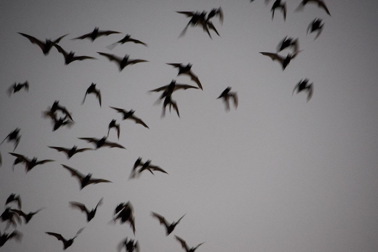 Bats (7)