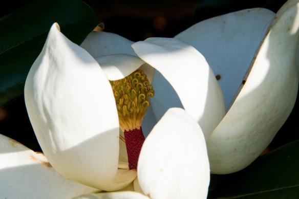 Magnolia (59)