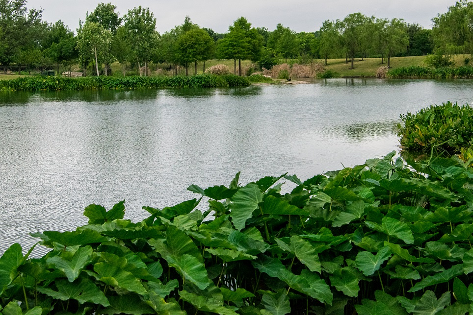 Mueller Lake (1)