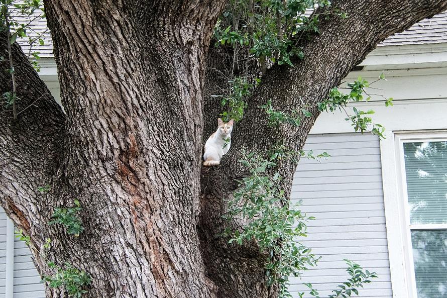 Cat in a tree (1)