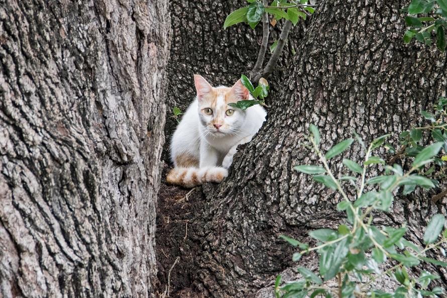 Cat in a tree (2)