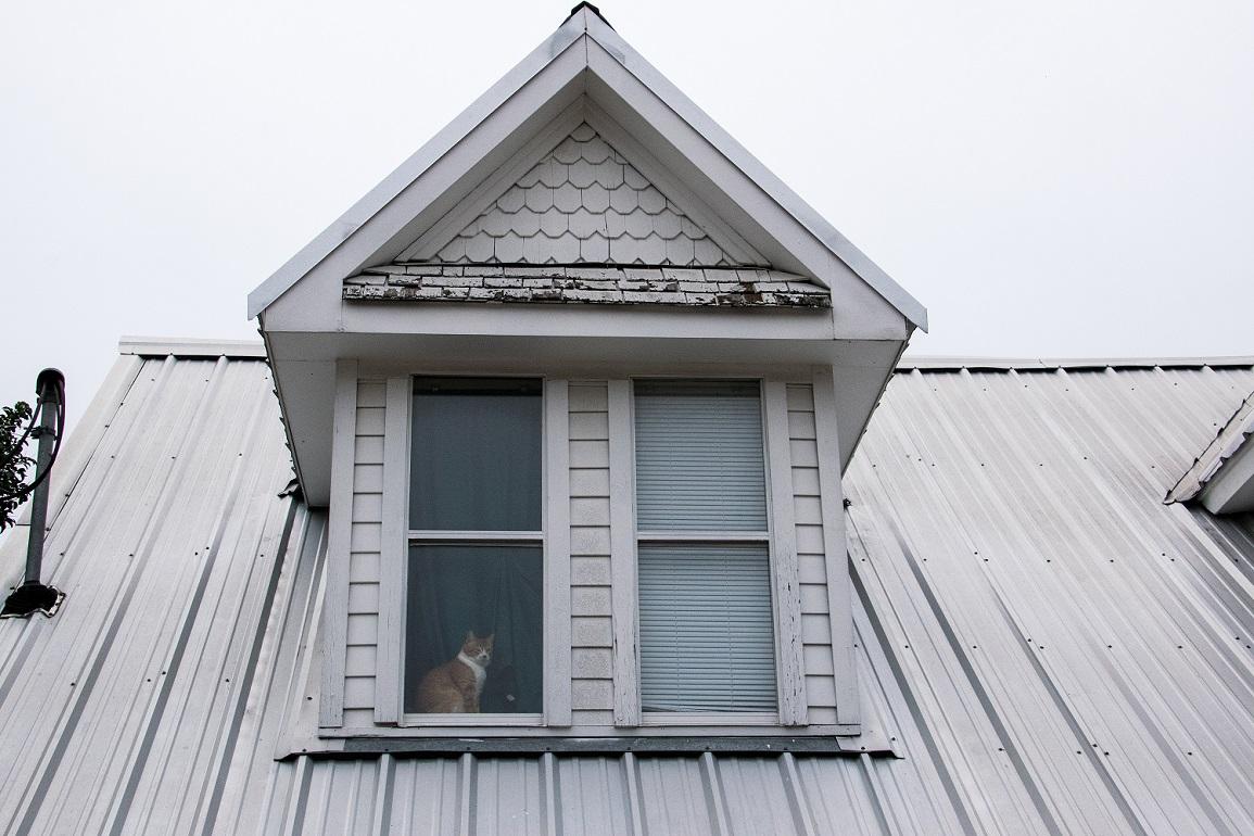 Cat in a window (1)