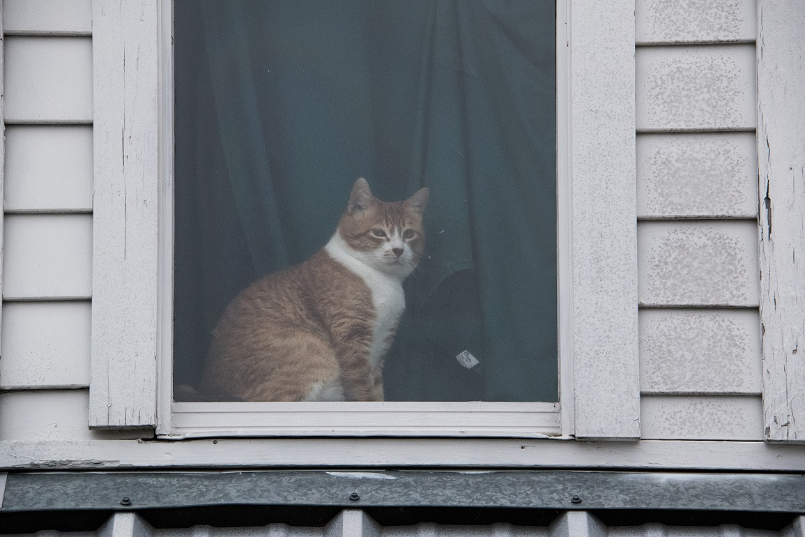Cat in a window (3)