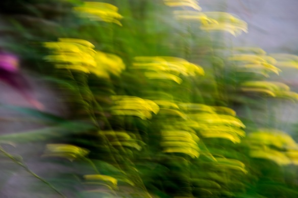 Yellow flowers panning