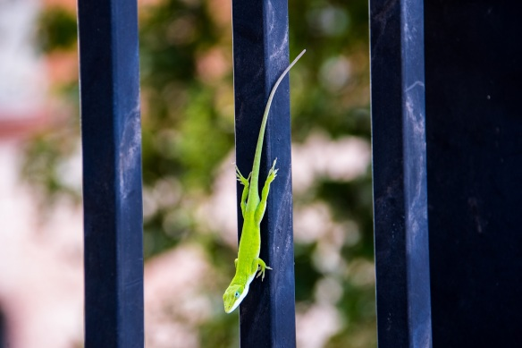 Green lizard (2)