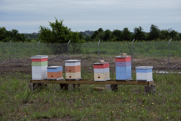 Beehives (1) (2)