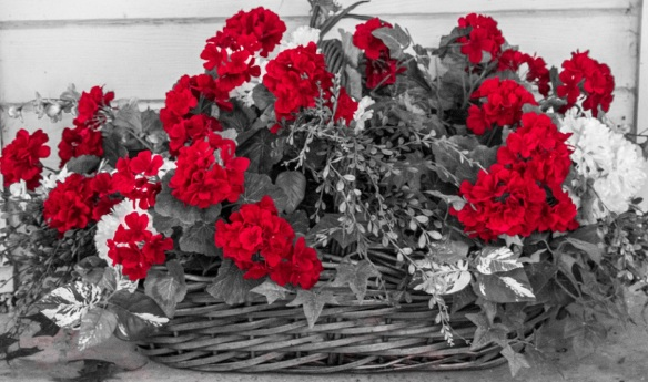 Flowers Red 2