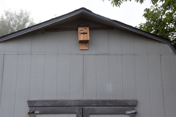 00s Shed with bat house 2 (2)