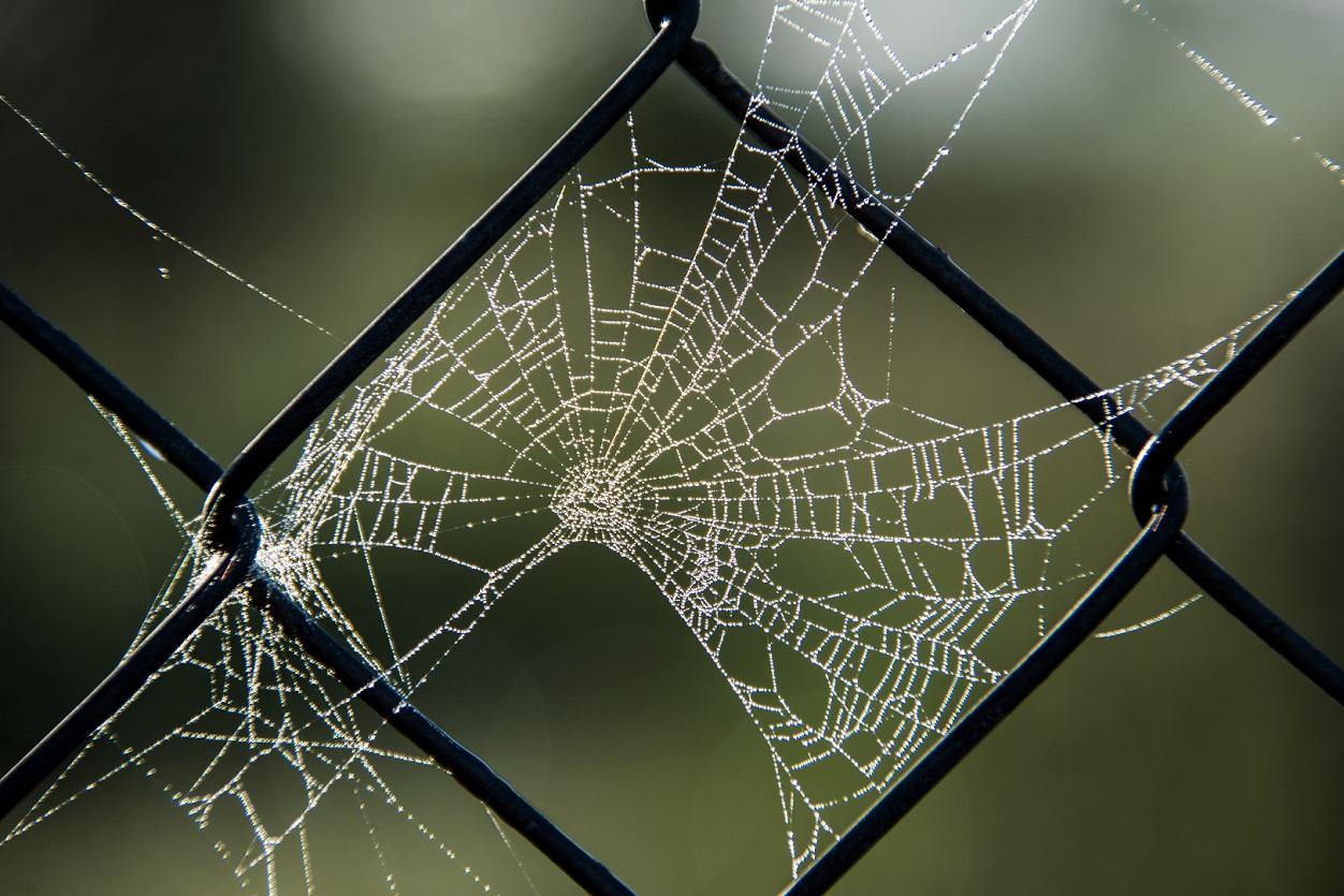 Spider Webs (1)