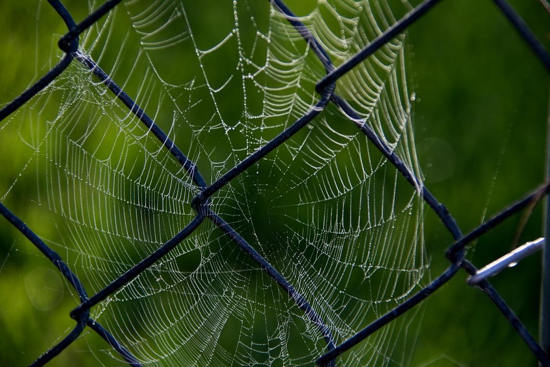 Spider Webs (2)